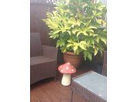 Large Garden Mushroom / Toadstool Ornament. New