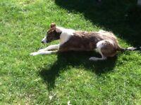 Guildford dog walking