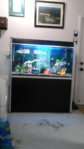 100 gallon fish tank with approximately  45 fish.