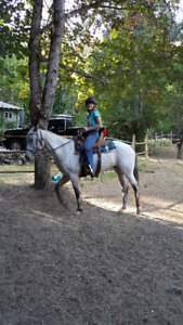 Flashy and athletic 12 y/o mare for sale