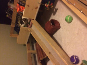 Pair of female guinea pigs with large custom cage to rehome