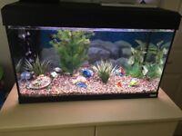 Fluval Roma 125 Designer Aquarium 80x35cm