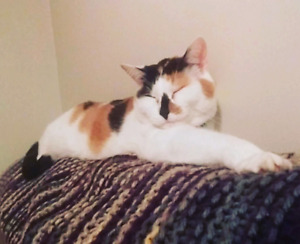 Quiet Nursing Student and Cat looking for Sep 1st