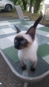 One make f6 kitten still available, ready to go.