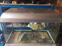 Elite 60L Aquarium Fish Tank with filter and Heater in Excellent Condition