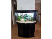 JUWEL VISION 180 LITER BOW FRONTED FISH TANK AND STAND FOR SALE,,LESS THAN YEAR OLD SET UP
