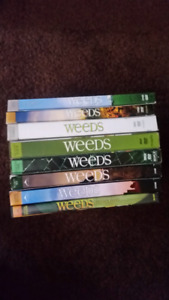 Weeds seasons for sale