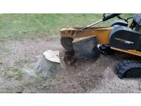 Tree Stump Grinding Chelmsford