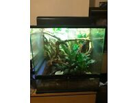 Two green anoles plus complete setup
