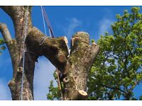 ABC TREE SURGERY/ Free Quotations/ Fully Qualified and Insured/ Tree Services