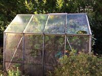 Crittall 8 x 4 greenhouse