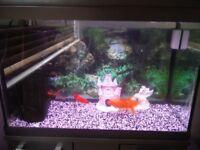 Fish Tank with 4 goldfish