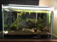 100l OptiWhite Aquarium | Taiwan Bee Shrimp | Includes loads of items.