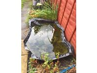 Pond pump fish plants