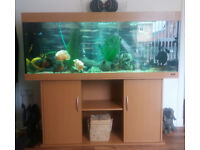 5 foot fish tank and cabinet