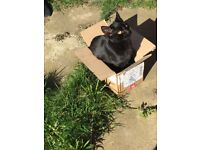 Missing black cat Rambo **still missing**