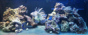 Salt Water Fish, Corals, Tanks & More From Sealife Central