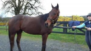 "Young Male Horse - Thoroughbred: ""Windstrong"""