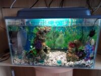 Small 30 litre tropical Aquarium with all accessories