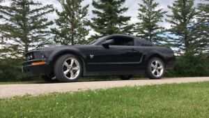 Safetied 2009 Mustang!