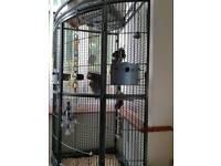 African Grey Corner Cage