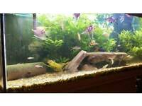 3-1/2 ft fish tank