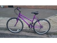 Robust purple 18 speed mountain bike ***Can Deliver***