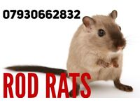 PEST CONTROL. Rats, Bed Bugs, Ants, Cockroaches call ROD RATS