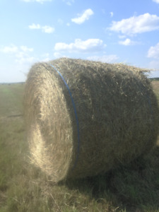 Treshed timothy hay