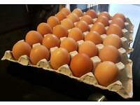 Fresh Eggs free range