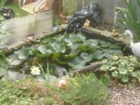PREFOREMD POND WITH PUMP FILTER UV FISH LARGE LILLY £250