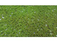 Azolla (Fairy moss)- Portion 90 g