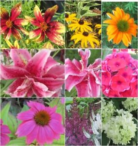 ALL PLANTS on SALE- Perennials & More-.60 CENTS & up| 25-60% Off