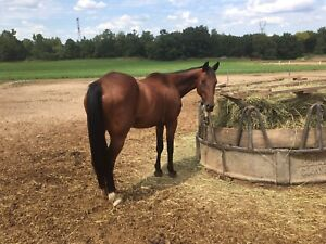 Rescue Horse for sale