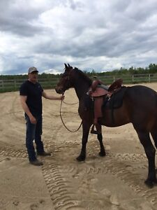 little 8 year old gaited Rocky Mountain