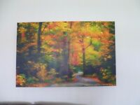 Colourful Forest Path Canvas - Excellent Condition