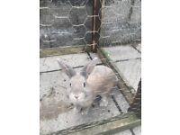 2 rabbits left