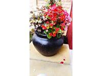 Fibre glass pot n flowers