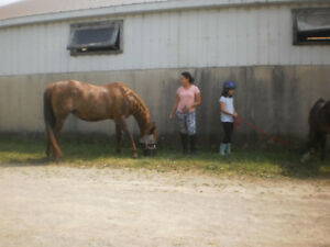 Hands-on Everything horse for kids 4+yrs old