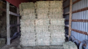 1st cut small square hay bales for sale