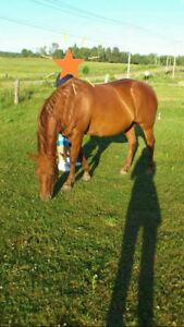 Perfect husband/kids trail horses