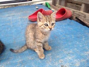 Kid friendly Kittens