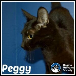 "Young Female Cat - Domestic Short Hair: ""Peggy"""