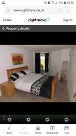 Modern one bedroom flat Hamilton- available now