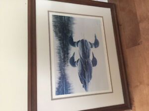 Framed print Loons. Signed and numbered
