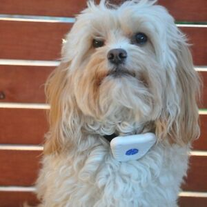 Stop that barking ( brand new collar)