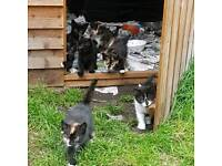 7 Kittens ready too go NW London
