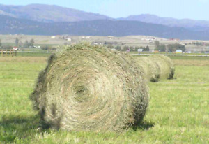 Alfalfa/Timothy mix hay for sale.
