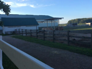 Available: stalls and outdoor. Your horses favourite place to be