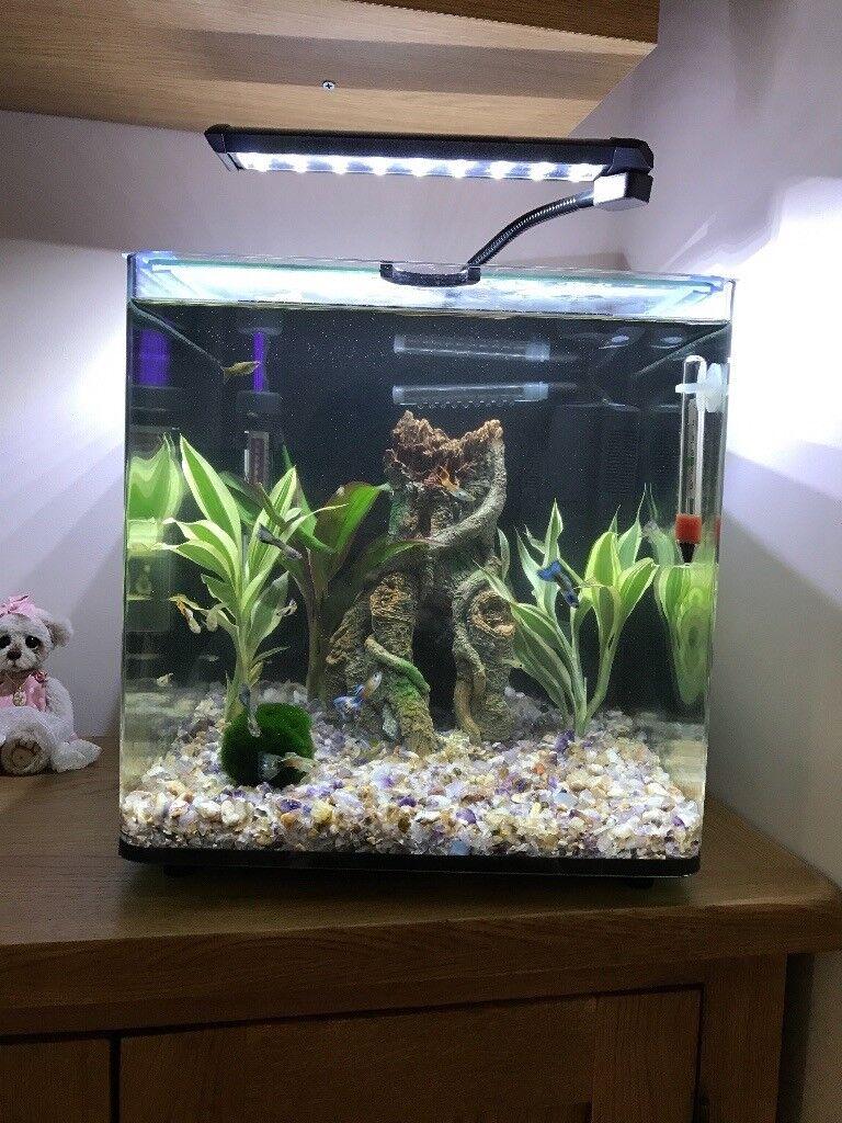Aqua One Aqua Aspire 55 Fish Tank In Houghton Le Spring